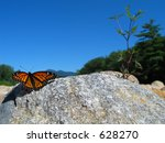 Monarch Butterfly Perched On A...