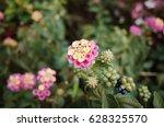 flower photograph | Shutterstock . vector #628325570