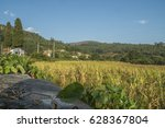 Cornfield With Mountains