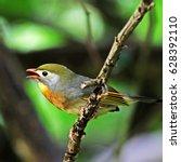 red billed leiothrix  bird... | Shutterstock . vector #628392110