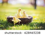 Three Little Ducklings In A...