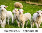group of lambs  little cheep | Shutterstock . vector #628480148