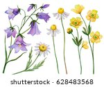 Watercolor Set Of Wild Flowers...
