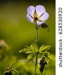 violet macro flower | Shutterstock . vector #628530920