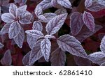 Purple Leaves Are Covered With...