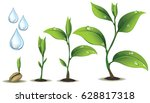 young plant life process | Shutterstock .eps vector #628817318