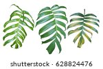 collection of monstera... | Shutterstock . vector #628824476