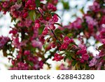 dark apple blossoms | Shutterstock . vector #628843280
