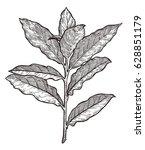 bay leaves illustration ... | Shutterstock .eps vector #628851179
