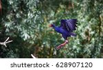 purple swamphen  porphyrio... | Shutterstock . vector #628907120