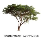 isolated rain tree with green... | Shutterstock . vector #628947818