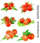 Collage (collection )of Lush tomatoes with green foliage. Isolated over white. - stock photo