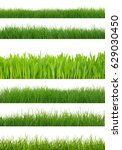 green grass isolated on white... | Shutterstock . vector #629030450