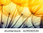abstract dandelion flower... | Shutterstock . vector #629030534