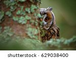 owl on the tree. hidden... | Shutterstock . vector #629038400