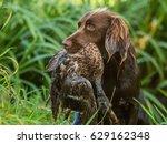 german pointer with duck   Shutterstock . vector #629162348