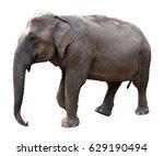asian elephant on white... | Shutterstock . vector #629190494