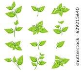 green tea leaf collection set.... | Shutterstock .eps vector #629215640