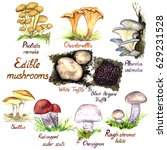 Mushrooms Variety Set  Pholiot...