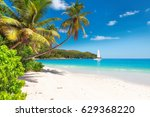 Sandy Beach With Palm Trees And ...