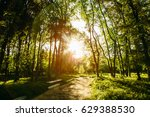forest in the rays of the... | Shutterstock . vector #629388530