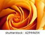 Closeup Of A Blooming Orange...