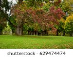 places of pushkin in autumn | Shutterstock . vector #629474474
