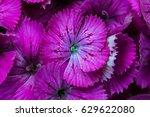 closeup beautiful flower petals. | Shutterstock . vector #629622080