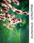 natural flower. | Shutterstock . vector #629629988