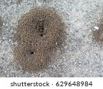 Small Round Ant Escape Holes I...