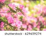 close up of pink flower... | Shutterstock . vector #629659274