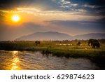 elephants in lower zambezi... | Shutterstock . vector #629874623