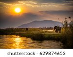 elephants in lower zambezi... | Shutterstock . vector #629874653