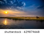 Elephants In Lower Zambezi...