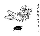 celery stick hand drawn vector... | Shutterstock .eps vector #629920604