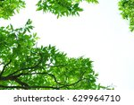 texture of the fresh green... | Shutterstock . vector #629964710
