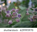 close up with blurred to purple ... | Shutterstock . vector #629995970