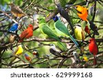 Stock photo bird collage 629999168