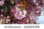 sakura | Shutterstock . vector #630005498