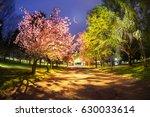 beautiful flowers of japanese... | Shutterstock . vector #630033614