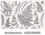 set with leaves. ferns.  vector ... | Shutterstock .eps vector #630036680