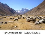 flock of sheep in broad valley... | Shutterstock . vector #630042218