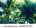 palm tree background at sunset  ... | Shutterstock . vector #630075734