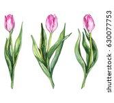 watercolor pink tulip flower... | Shutterstock .eps vector #630077753