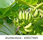 green banana on tree and fresh... | Shutterstock . vector #63017464