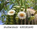 Close Up Of Saguaro Cactus In...