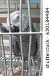 Small photo of African gray parrot in cage