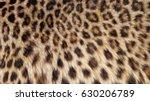 beautiful leopard fur blowing...   Shutterstock . vector #630206789