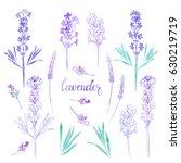 lavender. watercolor... | Shutterstock . vector #630219719