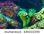 colorful underwater tropical... | Shutterstock . vector #630222350